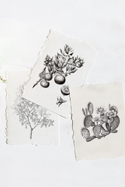 Free vintage botanical art printables printed on beautiful paper.
