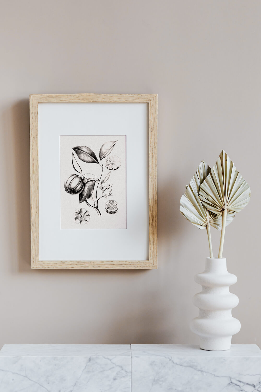 4 Free Printable Bintage Botanical Prints