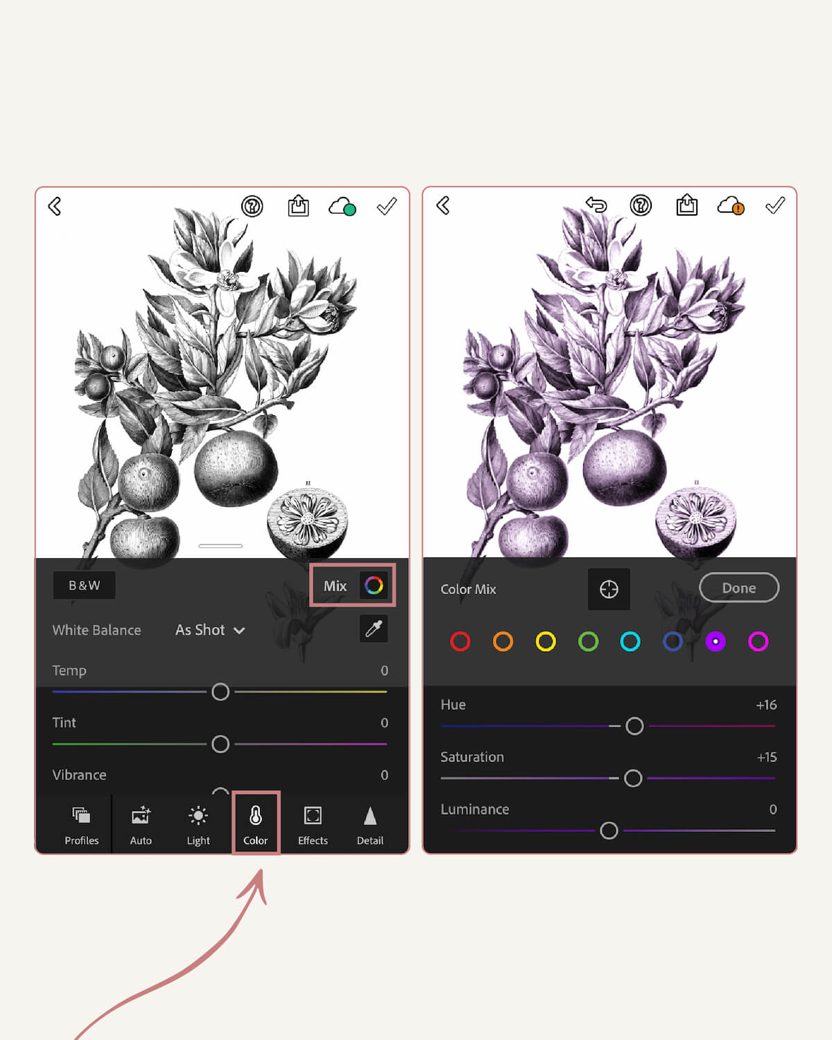 How To Colorize The Vintage Botanical Illustrations